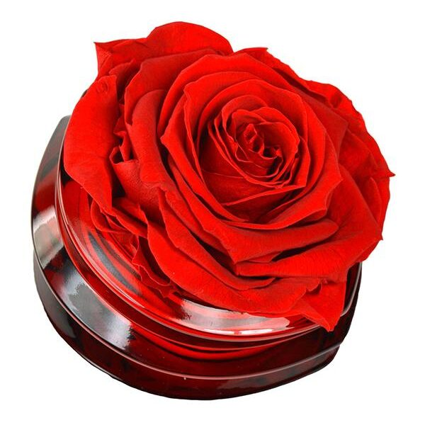 TLM-5 Мини композиция из белых роз