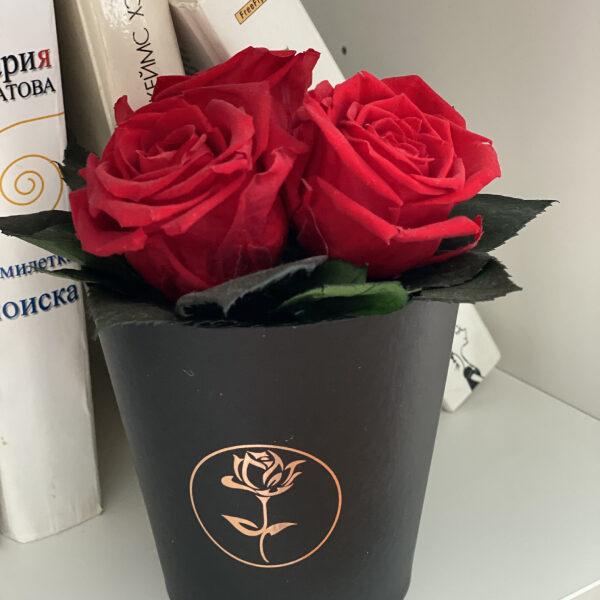 Стабилизированные розы в горшочке